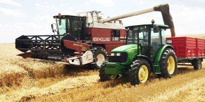 Nallıhan'da erken arpa ve buğday hasadı