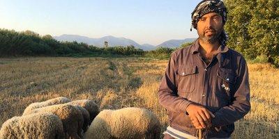 Siyaseti bırakıp çobanlık yapmaya başladı