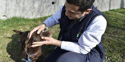 Hayvanseverlere Mamak Belediyesi'nden çağrı