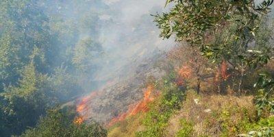 Marmara Adası yangınının ilk bilançosu açıklandı
