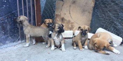 Yenimahalle'de zehirlenen 3 köpek öldü