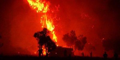 Çıkan orman yangınlarına uzmanlardan uyarı geldi