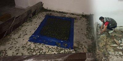 Sınır kapısında binlerce kaplumbağa ele geçirildi
