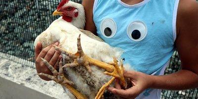 Milyonda bir 4 bacaklı tavuk