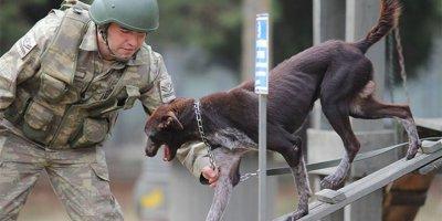 Yerli ırk köpek, sınır ötesi operasyonlarda kullanılıyor