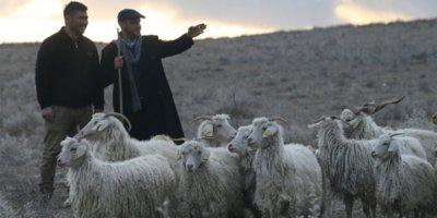 5 bin maaşla 150 bin çoban ithal edilecek