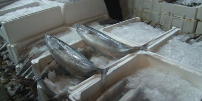 Ankara'daki balıkçılara gece denetimi yapıldı