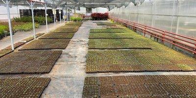 Gölbaşı'nda 80 bin sebze fidesi dağıtacak