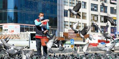 Başkent'te sokak hayvanları es geçilmiyor