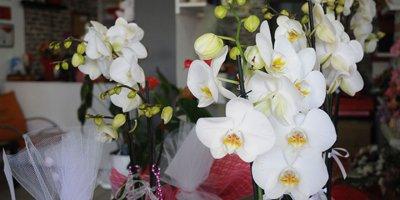 Çiçek satışlarında rekor artış