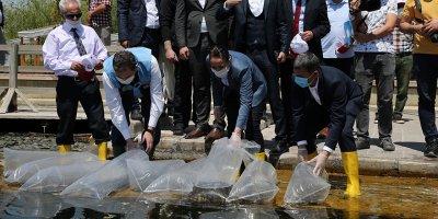 35 bin sazan Mogan Gölü'ne bırakıldı