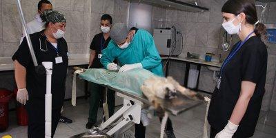 Sincan'da 20 günde 100 köpek kısırlaştırıldı