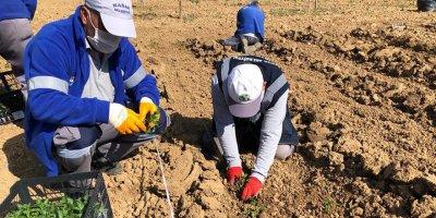 Mamak Belediyesi'nden tarım seferberliği