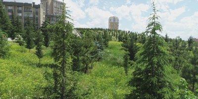 Etimesgut Belediyesi boş alanları ağaçlandırıyor