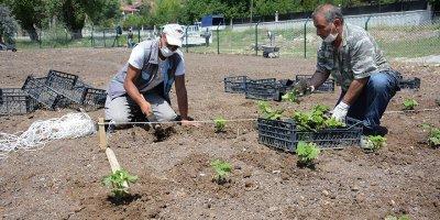 Keçiören Belediyesi tarımsal üretim için bostan kurdu
