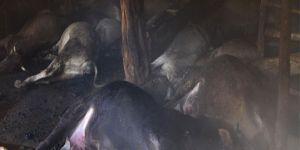 Ahır yangınında 29 büyükbaş hayvan telef oldu