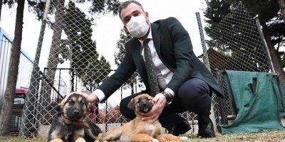 Pursaklar Belediyesi sokak hayvanlarına yuva arıyor