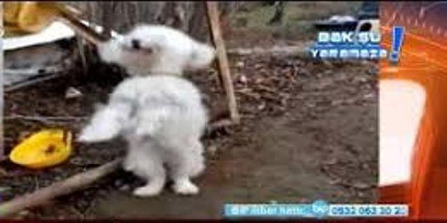 Horon tepen köpek! Çok güleceksiniz
