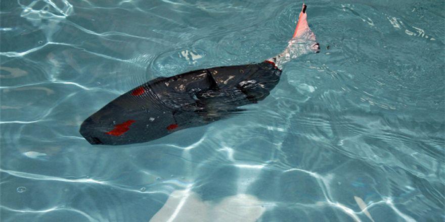 Bu da Akıllı robot balık