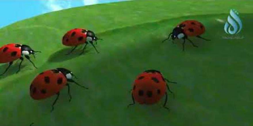 Uğur böceğinden insanlara büyük ders