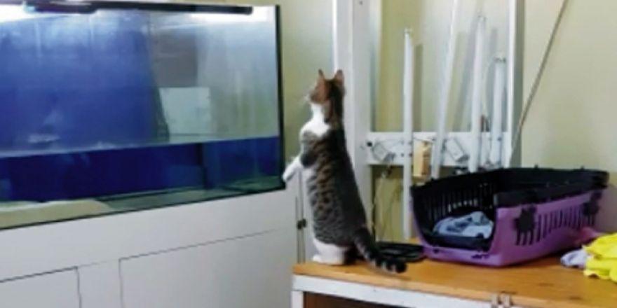 Kedi sineği yakalamak isterken bakın ne oldu