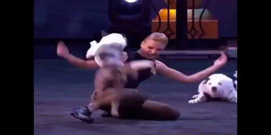 Bu köpekler bir harika! Süper gösteri