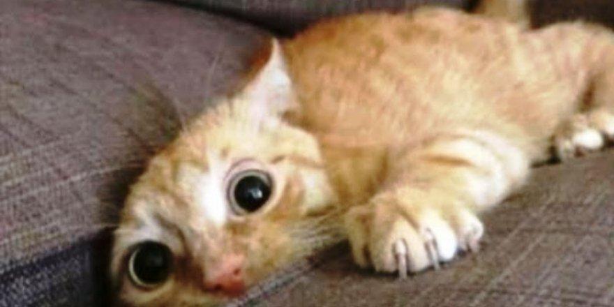 Gülme garantili komik kedi videoları