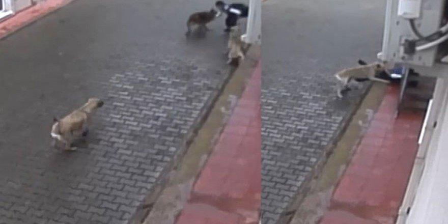 Köpekler ilkokul öğrencisine saldırdı