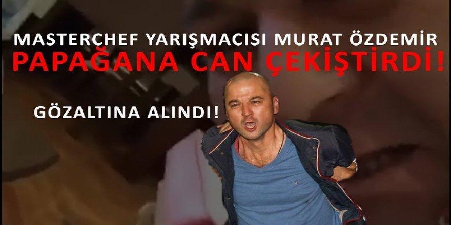MasterChef Murat Özdemir papağana can çekiştiriyor!