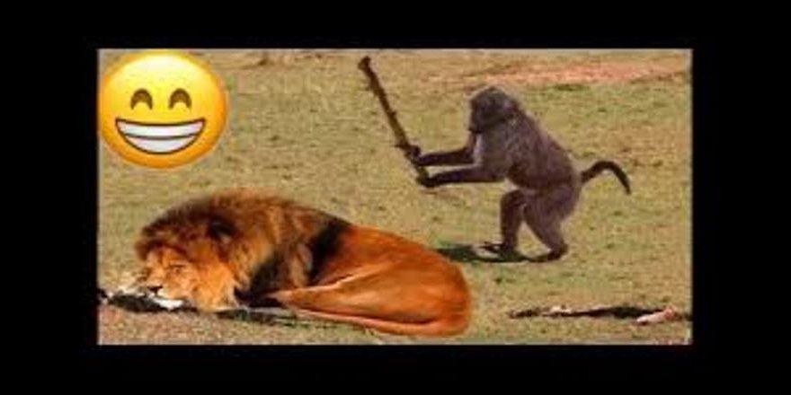 Çıldırmalık Hayvan Dublajları Komik