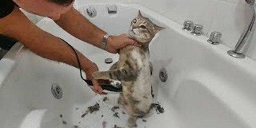 Veteriner 100 TL İsteyince Bende Kedimi Evde Tıraş Ettim