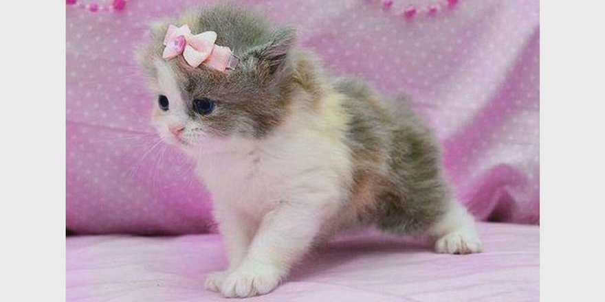 Birlikte Oynamak Komik Kediler Ve Bebekler