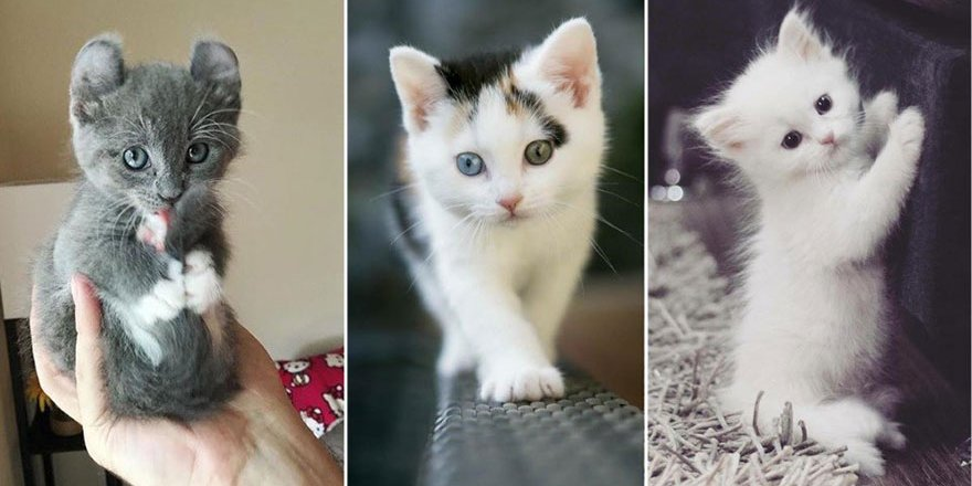 Minnoş Yavru Kediler