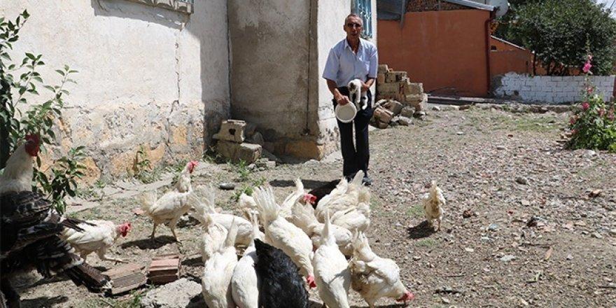 Tavukları için kiraladığı evi kümese dönüştürdü