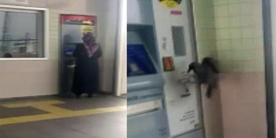 Hırsız karga kameralara yakalandı
