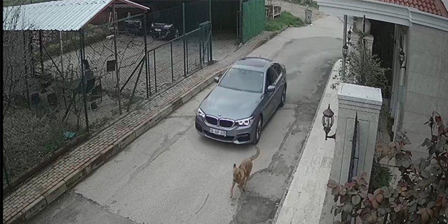 Pes dedirten olay! Sokak köpeğine kurşun yağdırdı