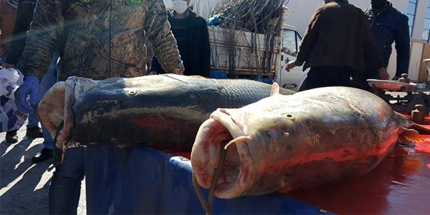 Dev turna balık şaşkınlığından sosyal mesafeyi unuttular