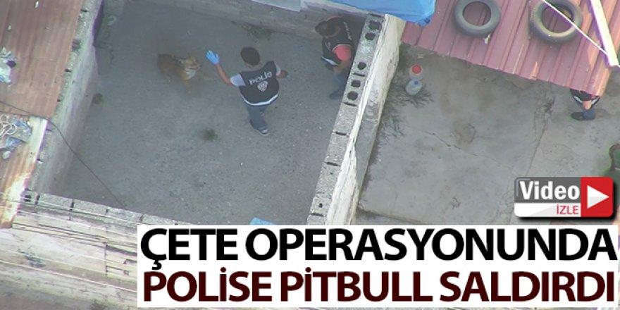 Çete operasyonunda polise pitbull saldırdı