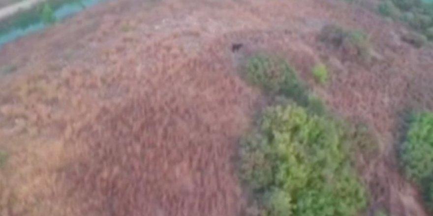Ormanda kaybolan keçi drone ile bulundu