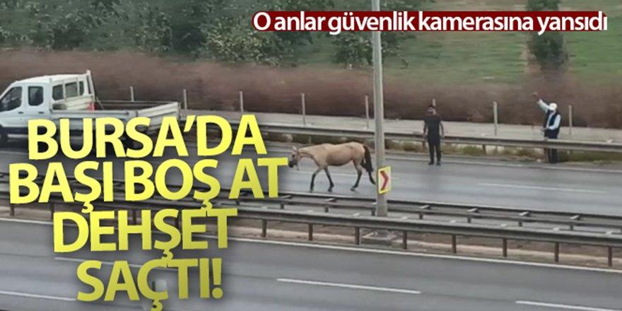 Başı boş atlar trafiği birbirine kattı!