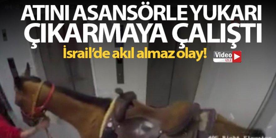 Atını asansörle yukarı çıkarmaya çalıştı