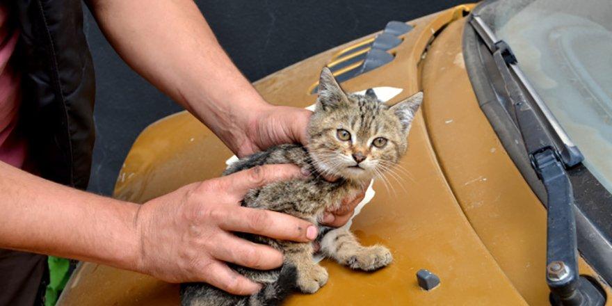 """Duyarlı vatandaştan otomobilin sürücüsüne not: """"Kaputta kedi var"""""""