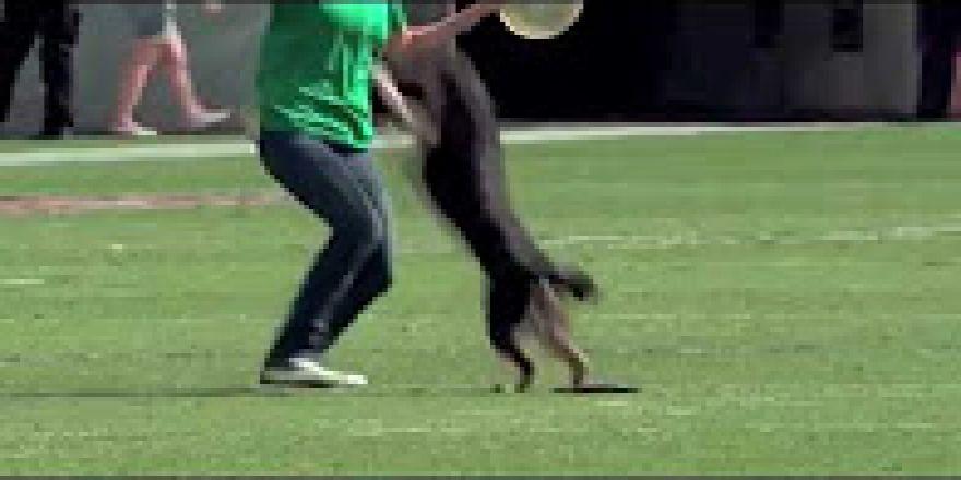 Köpekten freezbi şovu
