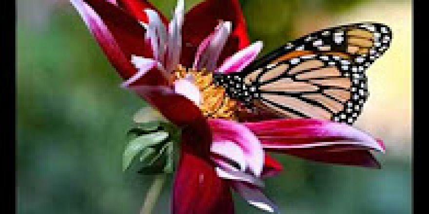 Doğa'nın güzellikleri