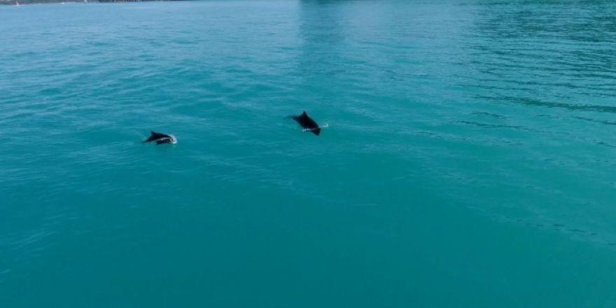 Yunusların dansı drone ile havadan görüntülendi