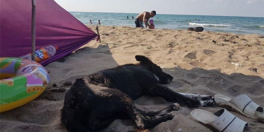 Zekası ile dikkat çeken sahipsiz köpek plajın maskotu oldu