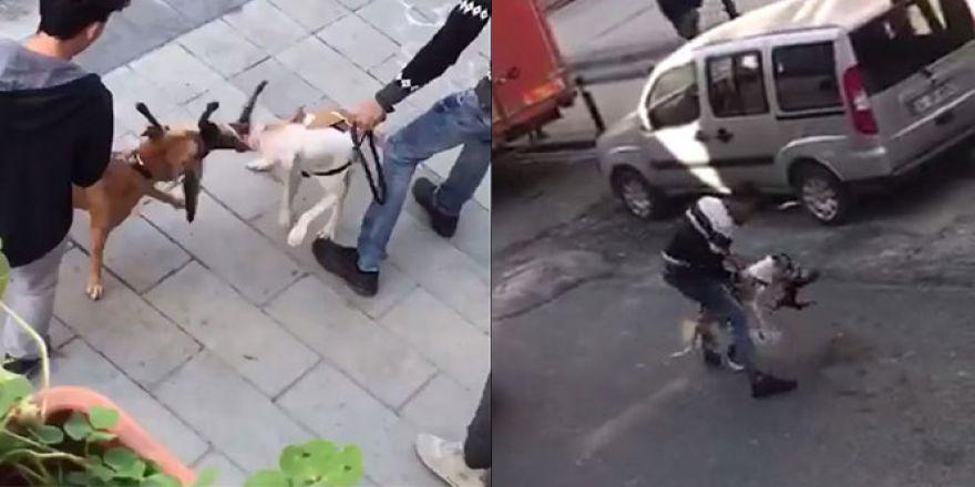 Gaziosmanpaşa'da yaşanan pitbull vahşeti kamerada