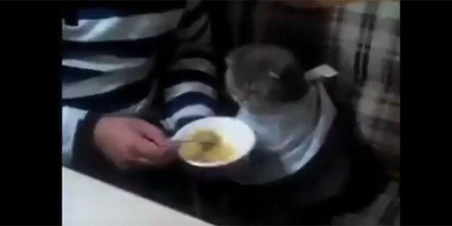 kedi insan gibi yemek yerse