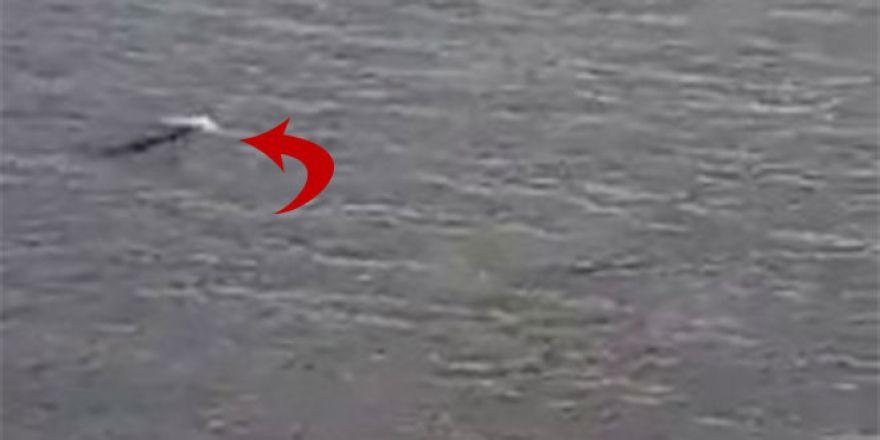 Kuşadası Milli Parkı'nda Akdeniz Foku görüntülendi